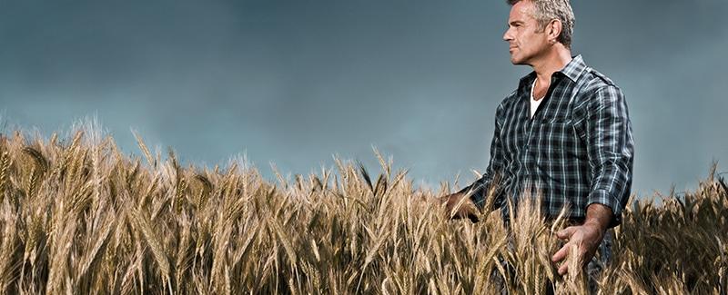 Weizenmehl macht dick und krank
